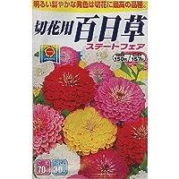 切花用 ステートフェア百日草 (805)