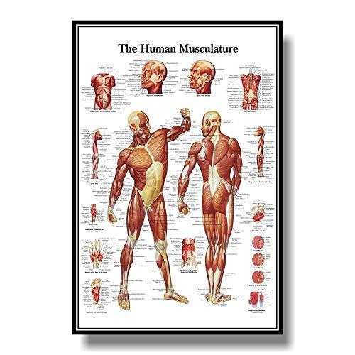 Esqueleto Muscular Sistema Anatómico Poster Anatómico Músculo Anatomía Gráfico Pared Arte Médico Oficina Humano Cuerpo Educativo Pared Pintura(No Marco)
