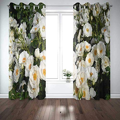 N / A Long Window Curtains,Door Window Curtain White Rose Bush in the Garden Botanical Rose Collection Germany Window Blackout Curtains for Family Friends Kids 2 Panels Windows Curtains