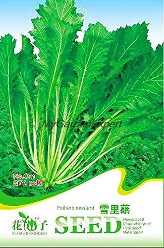Hot vente 50pcs potherb graines de moutarde, Herb plante annuelle, vert Semences Potagères, Jardin Bonsai Graines Livraison gratuite