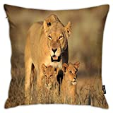 FULIYA Throw Pillows, Mom Lioness and Young Lion Kings in South African Nature Big Cats at Wilderness Safari,Decorative Cover Sets for Pillows ,18x18 Inches