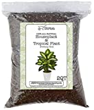 House Plant and Tropical Plant Potting Soil, Re-Potting Soil for All Types of Indoor House Plants, House Plant Re-Potting Soil, 2qt