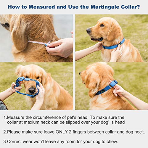 Dazzber Martingale Collar, Small, Royal Blue, Neck 11 Inch -15 inch, No Pull No Escape Dog Collar, Great for Training Walking Running