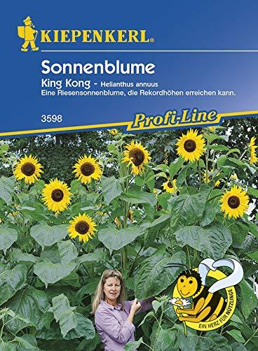 Kiepenkerl Helianthus Sonnenblume