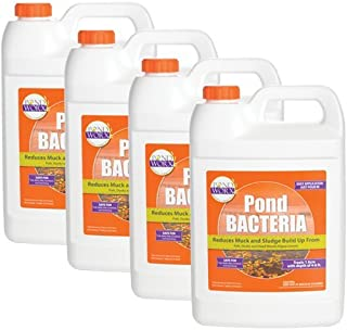 PondWorx Pond Bacteria - Formulated for Large Ponds, Water Features and Safe for Koi - 4 Gallon Value Pack