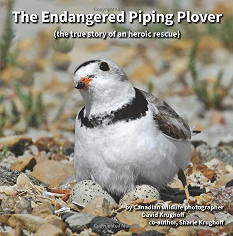 The Endangered Piping Plover: the true story of an historic rescue
