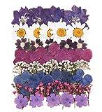 Gepresste Trocken-Blumen, gemischt