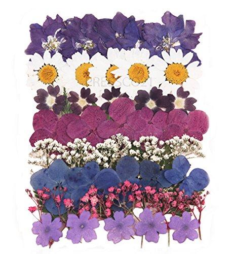 Getrocknete und gepresste Blumen gemischt