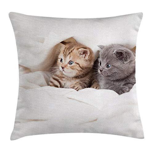 Funda de cojín con diseño de animales, dos pequeños gatitos escoceses doblados sobre el fondo blanco, impresión digital, funda decorativa cuadrada, color blanco y gris, tamaño: 45,7 x 45,7 cm