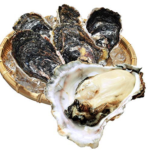 伊勢志摩産 岩牡蠣 10個 ( 1個あたり 400g〜500g ) 夏牡蠣