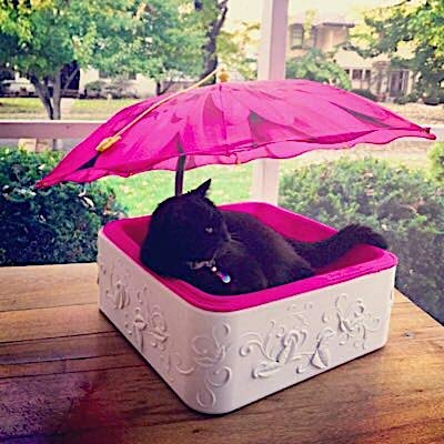 "Cat Bed Small Dog Bed Umbrella Shelter Pink Suede/Foam Cushion 16"" x16"" White High Impact Base 26' Pink Daisy Umbrella"