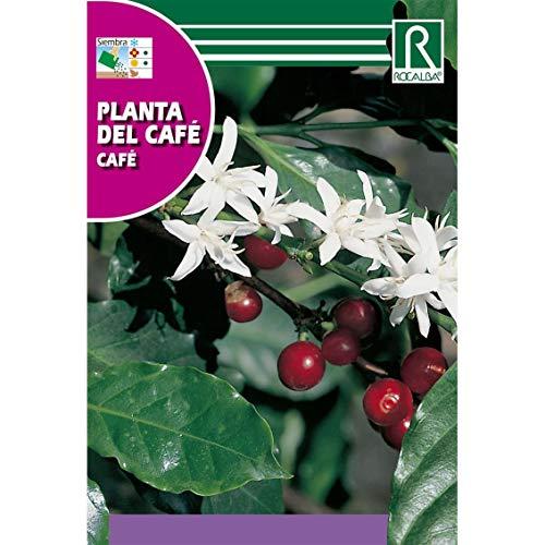 Comprar plantas rocalba