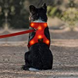 Iseen LED Dog Harness Micro USB Rechargeable No Pull Pet Vest Harness with Comfortable Padded Suit for Small Medium Large Dog (S, Red)