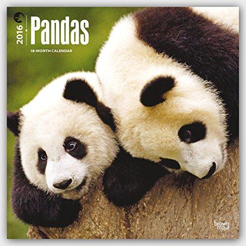 Pandas 2016 - Pandabären - 18-Monatskalender: Original BrownTrout-Kalender [Mehrsprachig] [Kalender