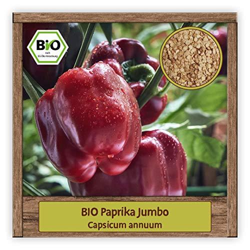 BIO rote Paprika Samen milde & süße Sorte JUMBO BIO Gemüsesamen Saatgut