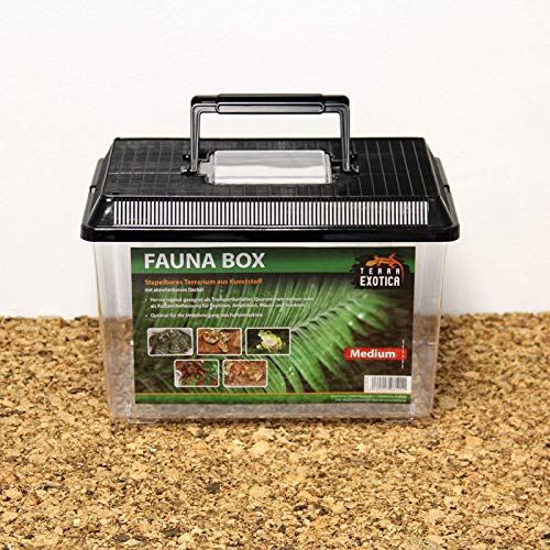 Terra Exotica Fauna Box - medium 30 x 19,5 x 20,5 cm