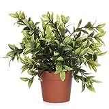 com-four® Planta Artificial en una Maceta, Planta Verde Artificial con Hojas Grandes para el hogar, la Oficina, la práctica o la Oficina, Muy fácil de cuidar (01 Piezas - Hojas Grandes)