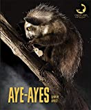 Aye-ayes (Creatures of the Night)