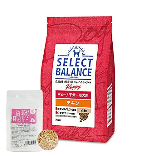 セレクトバランス ドッグフード パピー チキン小粒3kg 国産フリーズドライ納豆セット【ドッグパラダイス限定セット】