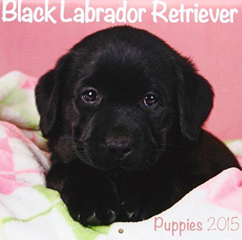 Black Labrador (Mini) 2015