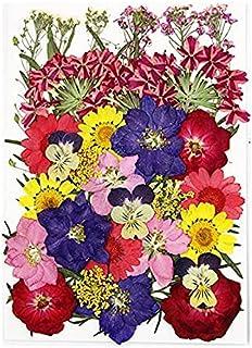 PAKUES-QO Plante Artificielle Vraie Fleur Séchée Plantes Sèches Naturelles pour Bougie Résine Époxy Pendentif Collier Fabr...