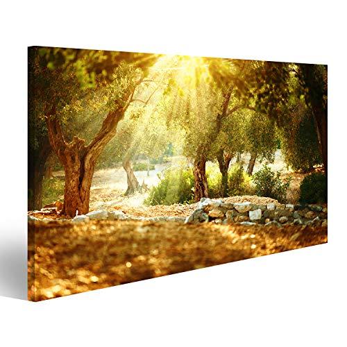 islandburner Bild Bilder auf Leinwand Olivenbäume Garten. Olivenbaumgarten mit altem Olivenbaum Wandbild, Poster, Leinwandbild PFE-1K-DE