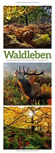 Waldleben - Ein Spaziergang durch heimische Wälder, Triplet-Kalender 2021 - Wandkalender im Hochformat (24x66 cm) - Waldkalender / Naturkalender