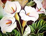 Pintar por números para adultos Niños, Cala, flores blancas 16x20 pulgadas Lienzo DIY Número Kits de pintura Pintado a mano Pintura al óleo Arte de la pared Decoración Regalos