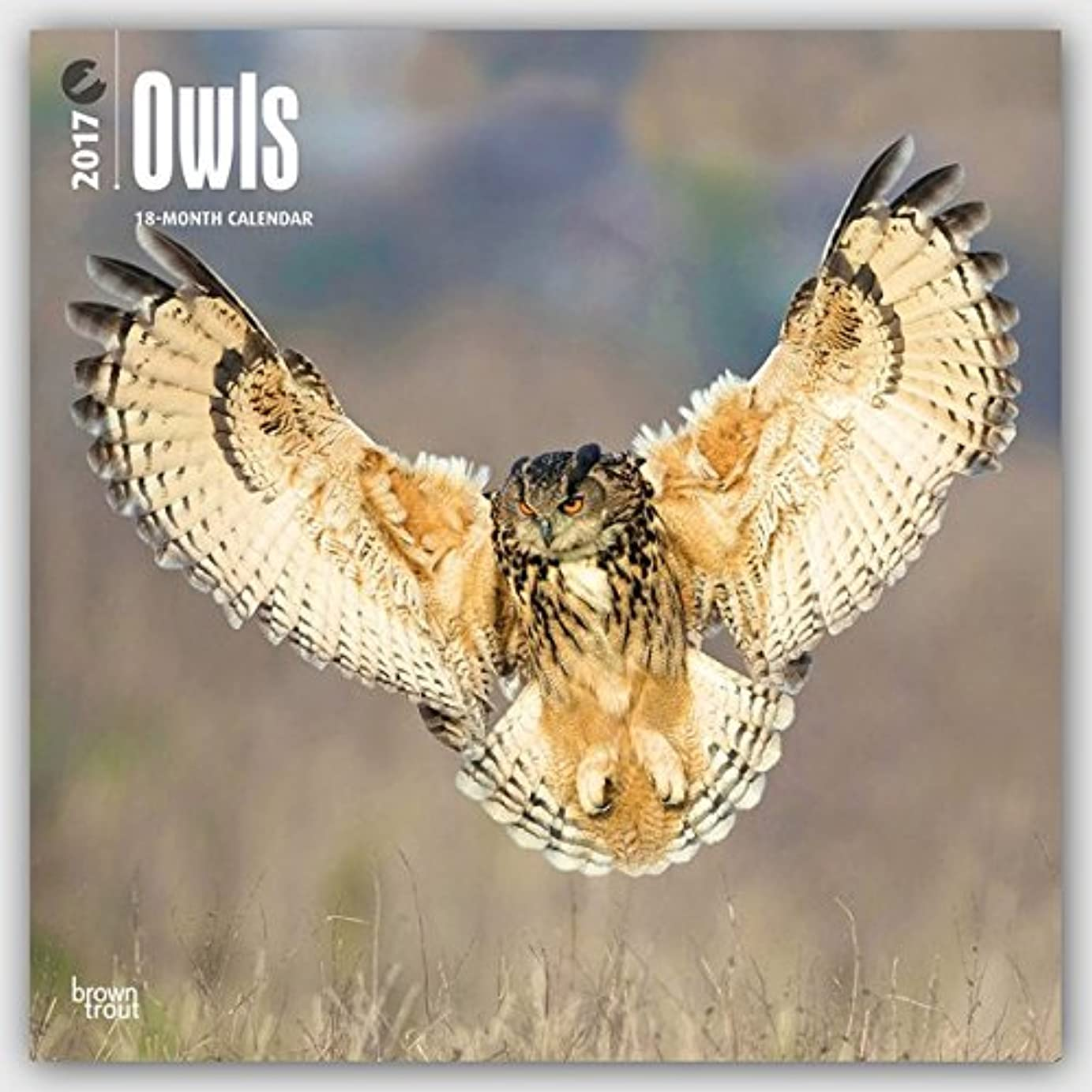 歯科のアプト宿Owls 2017 Calendar (Square Wall)