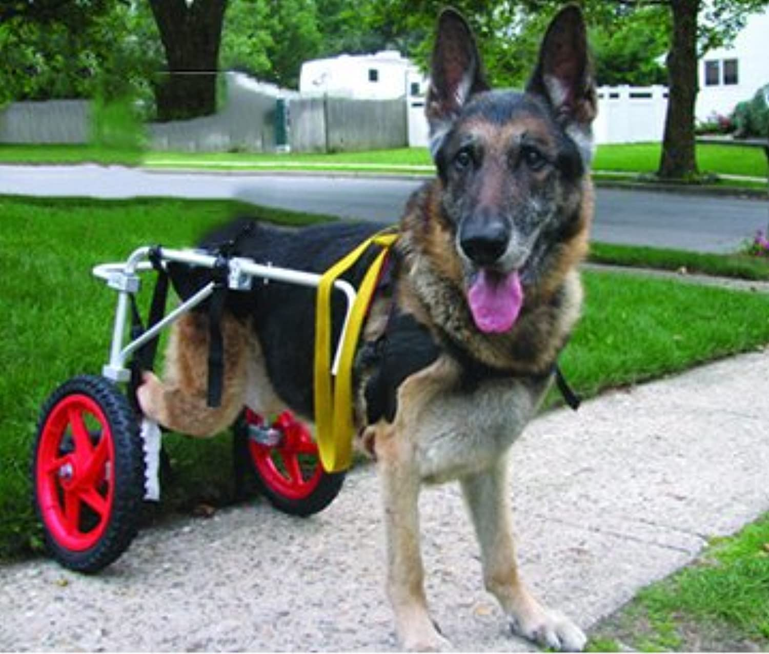 Adjustable Dog Wheelchair for Dog (L) , weight 60to 100 lbs, hind legs Rehabilitation, light weight