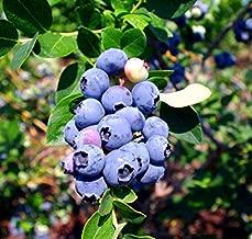 Best emerald blueberry plant Reviews
