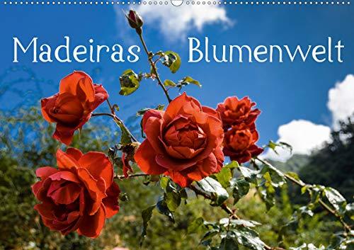 Madeiras Blumenwelt (Wandkalender 2021 DIN A2 quer)