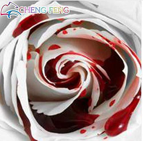 Burgund: 150 Stücke Seltenste Weiße Blutrose Blumensamen Blumengarten Asaka Seltene Wahre Blutrose Samen Bonsai Pflanze 2016