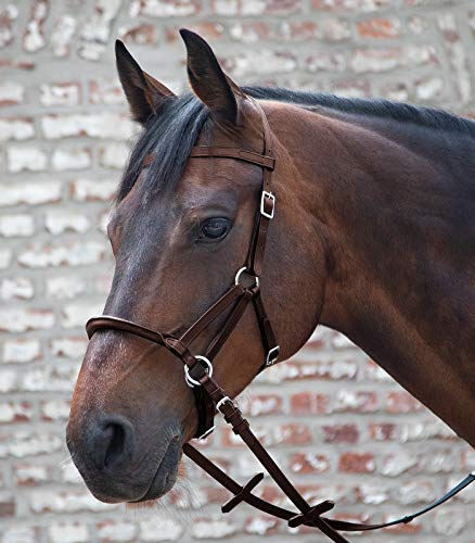 Waldhausen Linda Tellington Jones Lindel, schwarz, Warmblut