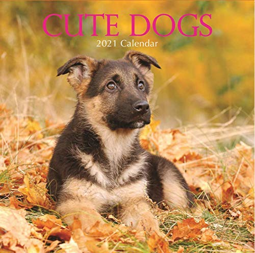 2021 Wall Calendar - Cute Dogs, 12 x 12 Inch Monthly View, 16-Month, Includes 180 Reminder Stickers