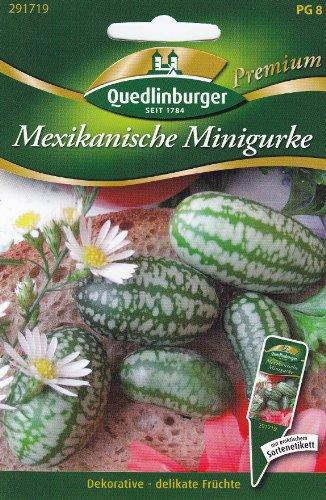 Mexikanische Minigurke