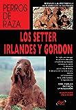 Los setter irlandés y gordon (Spanish Edition)