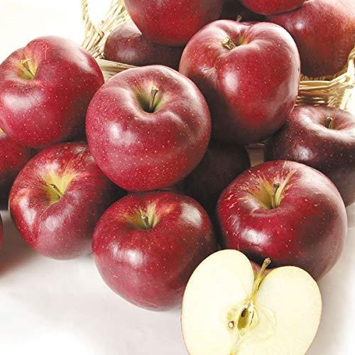 国華園 食品 青森産 大紅栄 10�s1箱 りんご