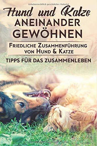 Hund und Katze aneinander gewöhnen : Friedliche Zusammenführung von Hund & Katze: Tipps für das Zusammenleben