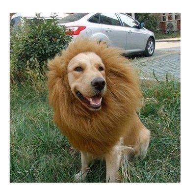PE0000/MJ,Crinie perruque de lion pour chien vements duisements (M 40*40CM)