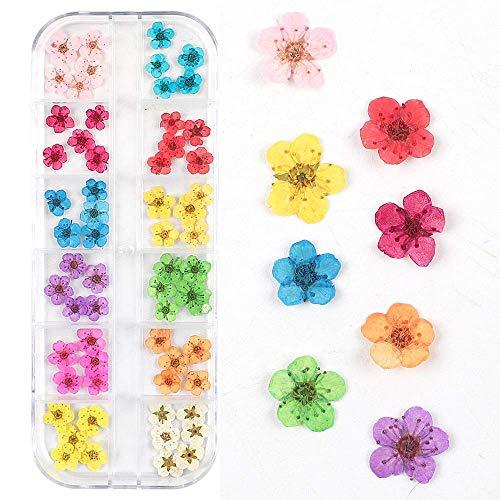 Valuu - Adhesivo de flores secas en 3D, 60 flores de cinco pétalos, 12 colores naturales de flores secas y auténticas, 60 flores?