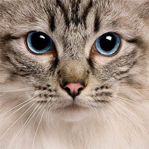 Mascota gato pintura de diamantes gato punto de cruz bordado de diamantes animal diamante mosaico rhinestone kit de decoración del hogar A2 45x60cm