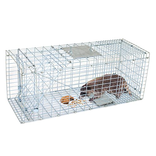 Best Animals Trap for Raccoons