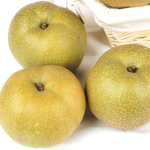 国華園 和歌山産 紀の里の梨 幸水 4kg 1箱