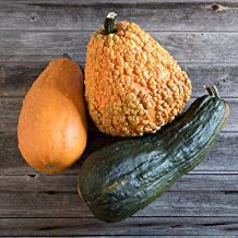 Lunch Lady Gourd Seeds (Cucurbita pepo) 10+ Rare Seeds + FREE Bonus 6 Variety Seed Pack - a $29.95 Value! Packed in FROZEN SEED CAPSULES for Growing Seeds Now or Saving Seeds For Years