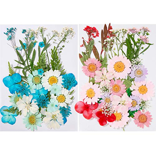 Naturales Flores Prensadas con Hojas Margaritas Secas Reales Varios Pétalos para Decoración Manualidades Bricolaje Joyas Uñas Velas 70 Piezas