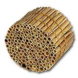 Hiss Reet® Schilfrohrhalme MEDIUM als Insektenhotel Füllmaterial I Ideal auch als Niströhren für Wildbienen, Bienenhotel geeignet I Verschiedene Längen (S: 11 cm Länge)