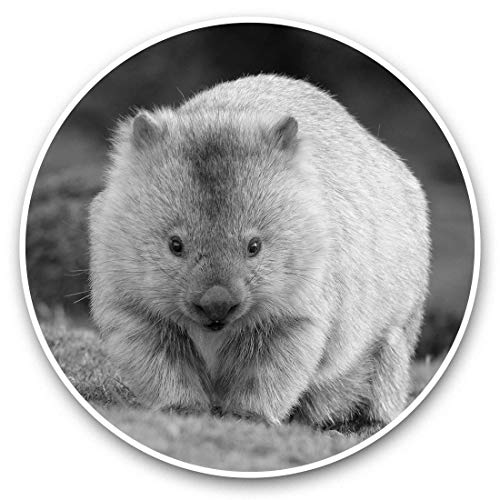 Pegatinas de vinilo (juego de 2) 15 cm (bw) – Cute Wombat Australia Animal 38239