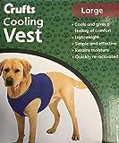 Crufts - Chaleco de refrigeración para Mascotas en Caja de Color, tamaño Grande