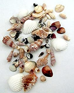 Gorgeous Natural Polished Seashells for Home, Parties, Decorations, Crafts by Forty Sycamore | Assorted Mixed Beach Shells Perfect for Nautical Decor | Approximately 50 Pcs per Bag